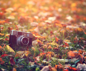 autumn, camera, and fall image