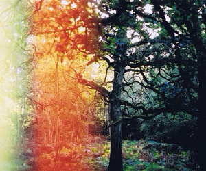 colors, forest, and landscapes image