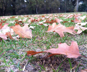 cool, fall, and leaves image