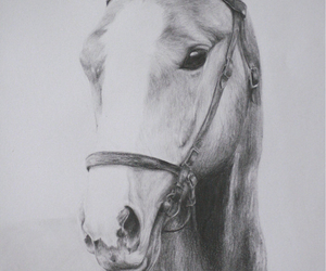 amazing, drawing, and horse image