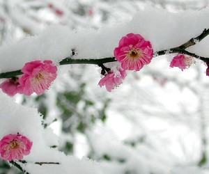 snow, flowers, and pink image