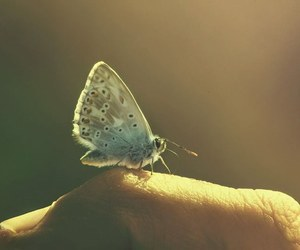 butterfly, animals, and nature image