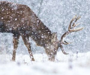 animals, hiver, and Joli image
