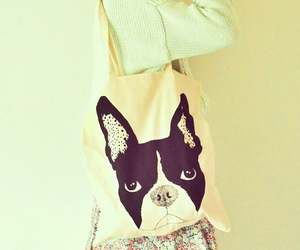 boston terrier, dog, and girly image