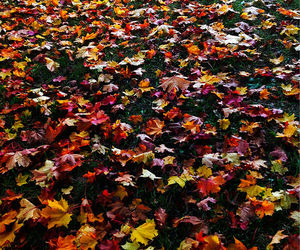 autumn, colours, and leaves image