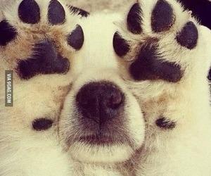 aww, cute, and dog image