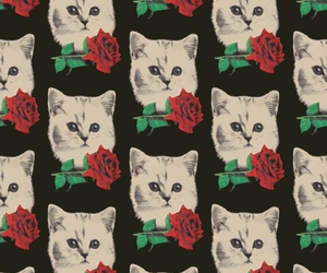 cat, rose, and background image