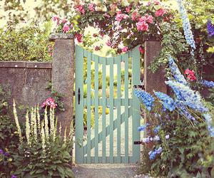 delphinium, flowers, and garden image
