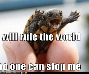 funny and turtle image