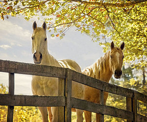 cute animals and horses image