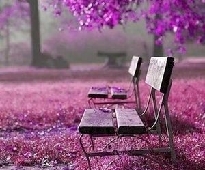 bench, park, and violet image