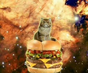 cat, space, and food image