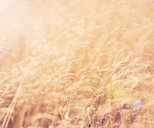 nature and fields of gold image