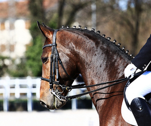 cheval, concorso, and dressage image