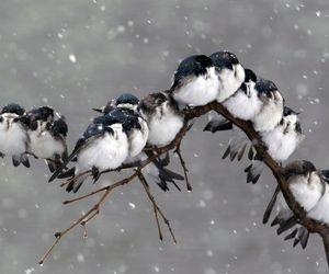 birds, snow, and winter image