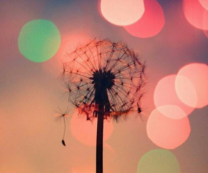 colours, lights, and dandelion image