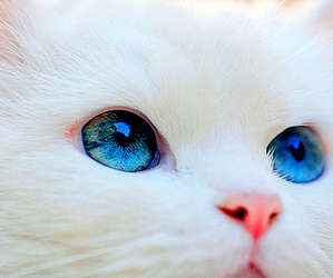 adorable, cat, and photography image