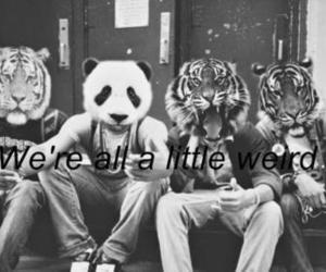 weird and panda image