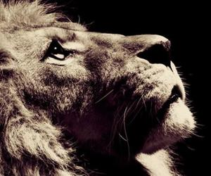 eyes, lion, and love image