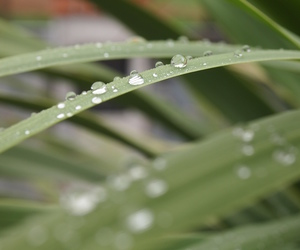 dew, nature, and water image