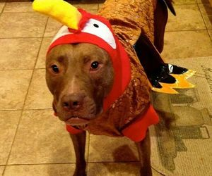 adorable, thanksgiving, and costume image