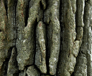 bark, nature, and rough image
