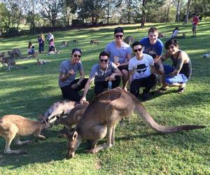 animals, kangaroos, and crown the empire image