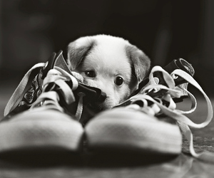 dog, shoes, and sweet image