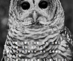 frozen, lost, and owl image