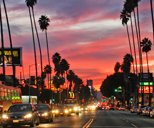 city, sunset, and palms image