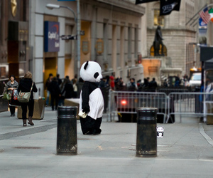 panda, city, and alone image