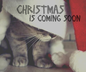 cats, white christmas, and christmas eve image
