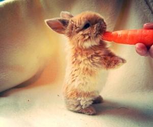 amigo, animal, and cute image