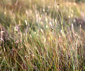 grass, light, and nature image