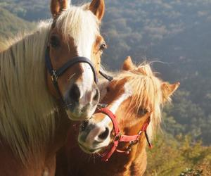 animals, blonde, and horses image