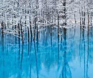 photography, snow, and winter image