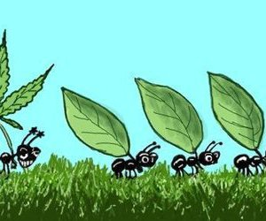 ant, ants, and high image