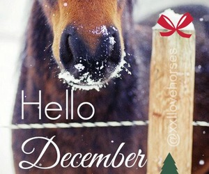 christmas, december, and equestrian image