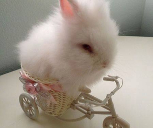 bunny, cute, and white image