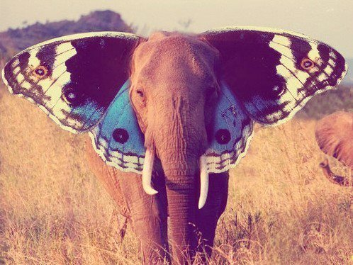 awesome, butterfly, and elephant image