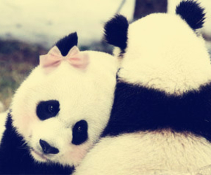 panda, love, and cute image
