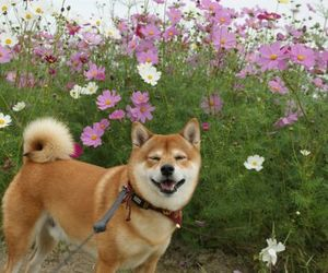 adorable, doge, and so cute image