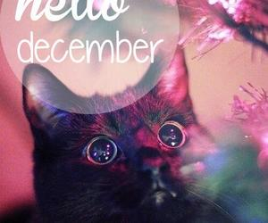 cat, december, and cute image