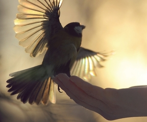 bird, wings, and fly image