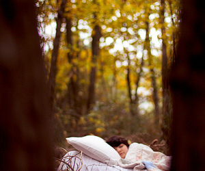 autumn, bed, and brown image