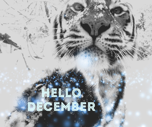 december, hello december, and edit image