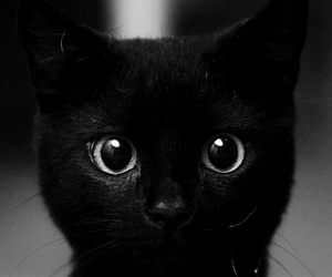 adorable, black, and cat image