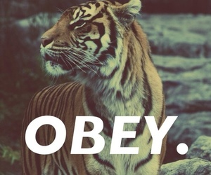 obey, tiger, and animal image
