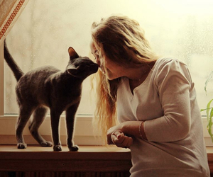 blue, cat, and russian image