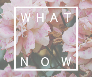 flowers, now, and what image